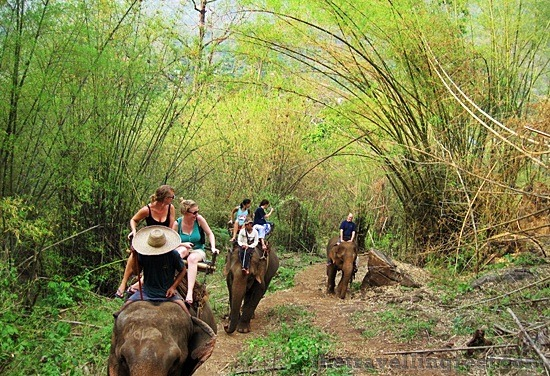 elephant ride in chiang mai