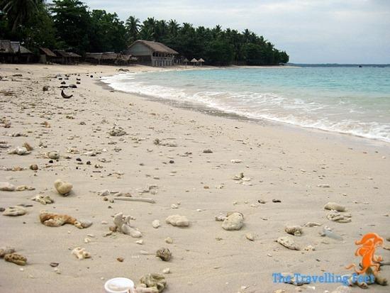 Spice Beach Allen