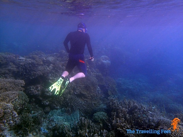 freediving in moalboal